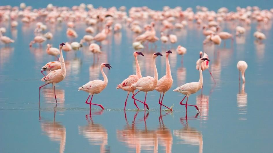 flamingo-group-jpg-adapt-945-1